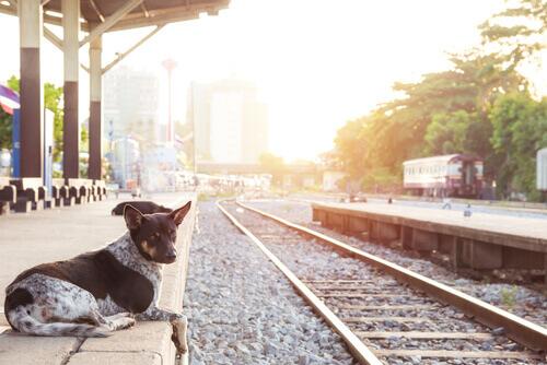 Storie commoventi di cani fedeli fino alla fine