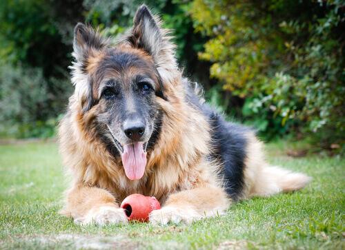 Consigli per i padroni di cani anziani