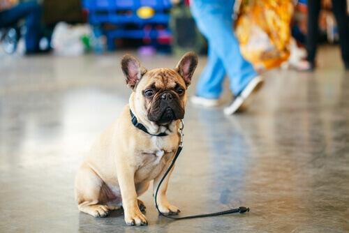Nasce un'app per cani smarriti