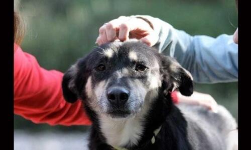 Petra-cane-con-scabbia