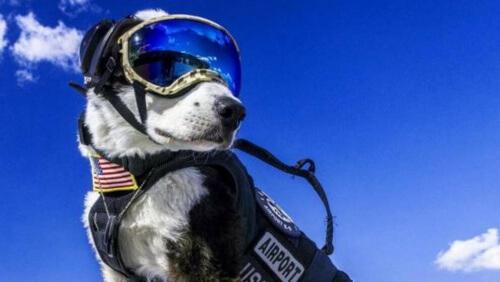 Negli Stati Uniti un cane trionfa come controllore di volo