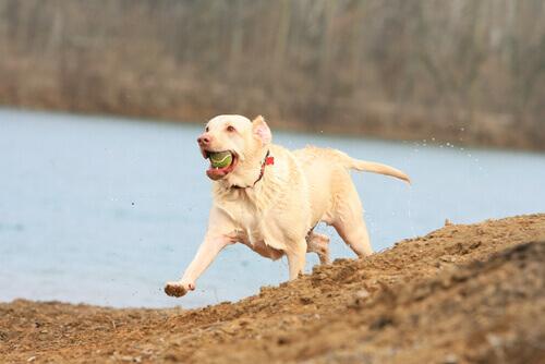 Come far dimagrire il vostro cane
