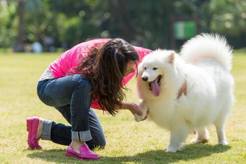 cani che esprimono affetto