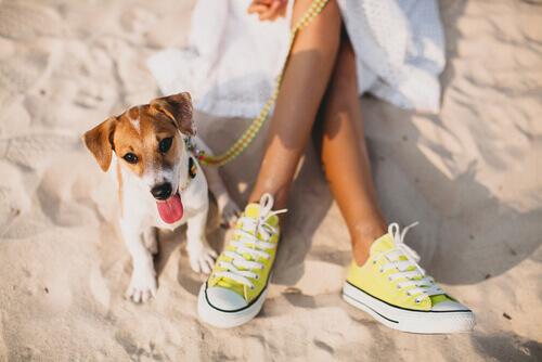 cane-e-donna-spiaggia