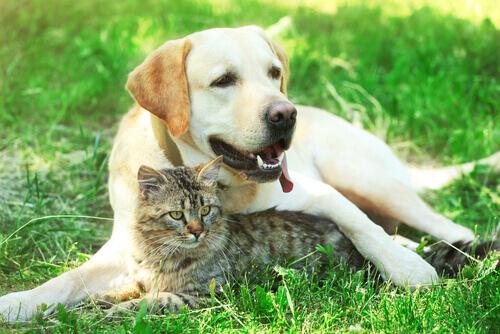animali domestici-cane-e-gatto