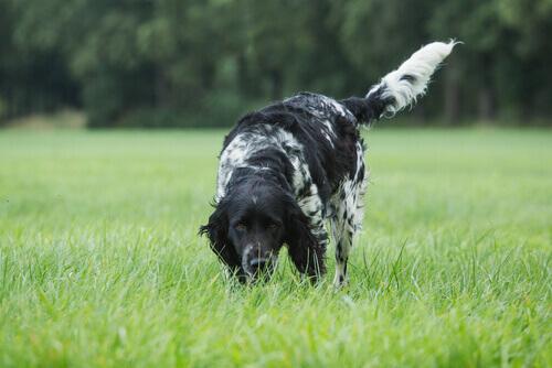 Ecco come stimolare l'olfatto difettoso nei cani