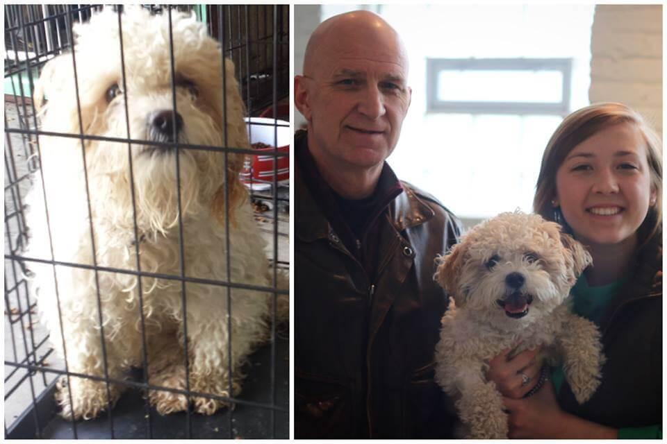 cane prima e dopo
