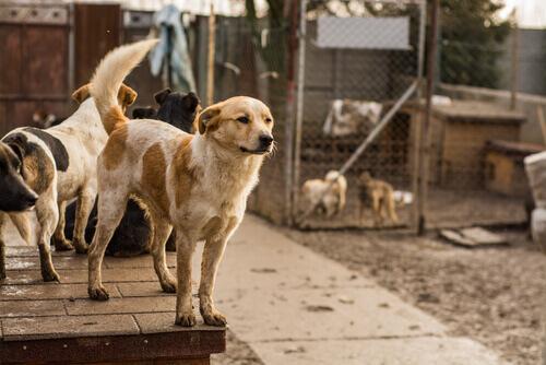 cani randagi-nel-rifugio