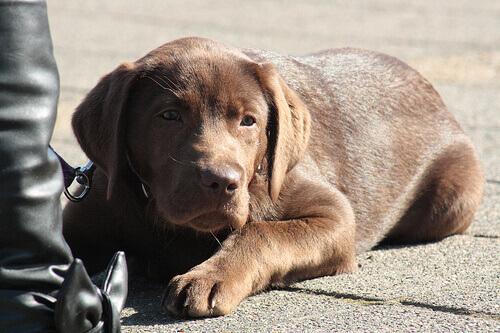 Insegnate al vostro cane a comportarsi bene nei dehors