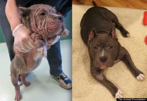Foto di cani prima e dopo essere stati salvati