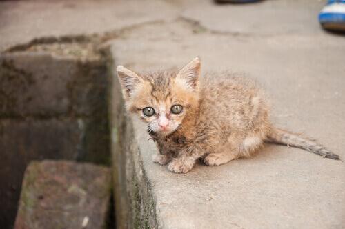 Salvato un gruppo di gattini rimasti incastrati in un condotto dell'aria