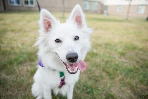cane bianco sul prato