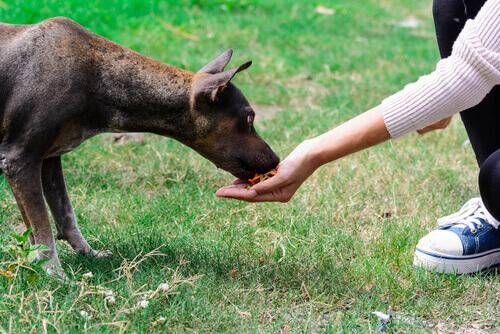 cane mangia dalla mano del padrone