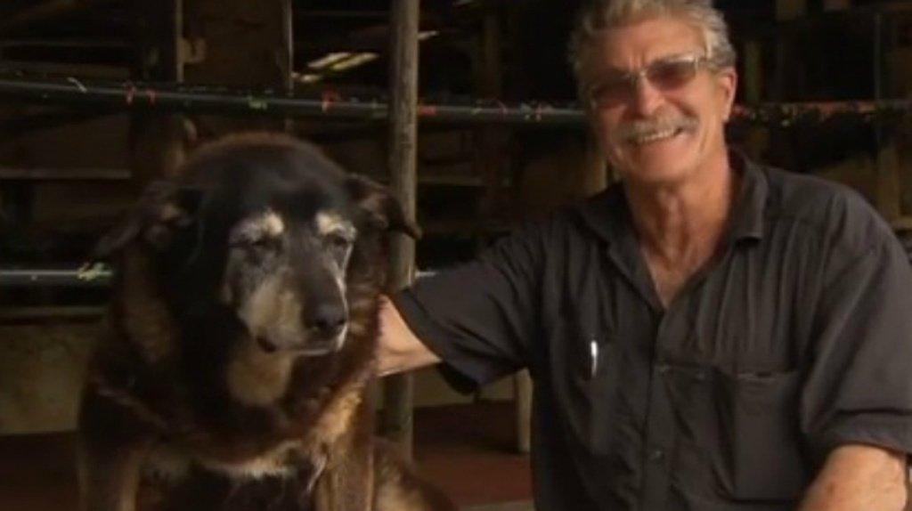 Muore il cane più vecchio del mondo