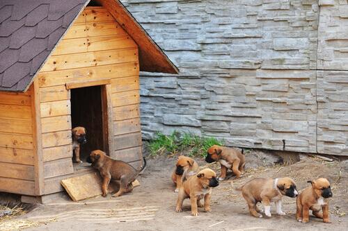 cuccioli-di-cane-e-cuccia