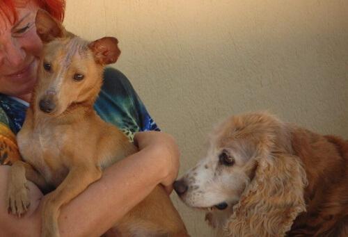 donna-austriaca-si-prende-cura-di-200-cani-abbandonati