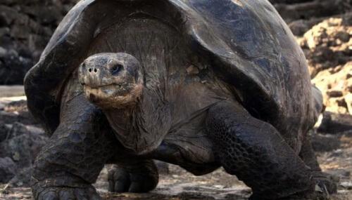 tartarughe delle Galápagos
