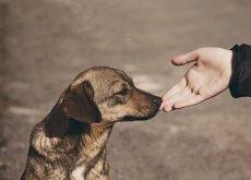 avvicinarsi-a-un-cane-che-non-si-conosce