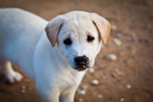 bambino-cambia-il-suo-regalo-di-cumpleanno-per-cibo-per-cani