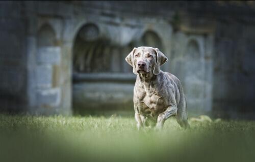 Ecco cosa sapere prima di castrare un cane