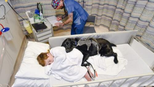 cane-e-bambino-nel-letto-dospedale
