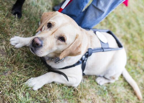 Spagna: i cani guida faranno compagnia agli anziani nelle case di riposo