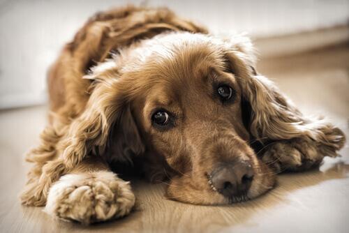 I cambiamenti di stato d'animo del cane