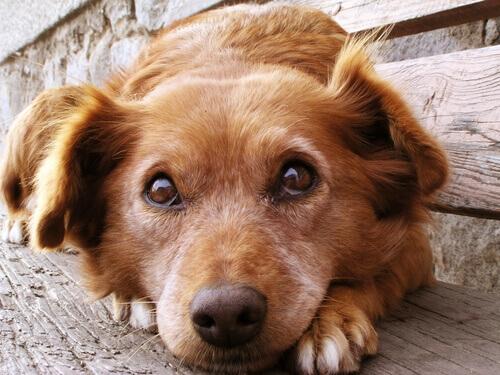 Segnali che indicano che il vostro cane è spaventato