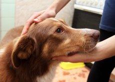 cane soffre di epilessia