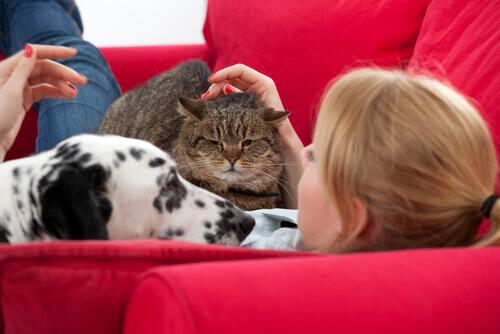 amore-donna-cane-e-gatto-sul-sofà