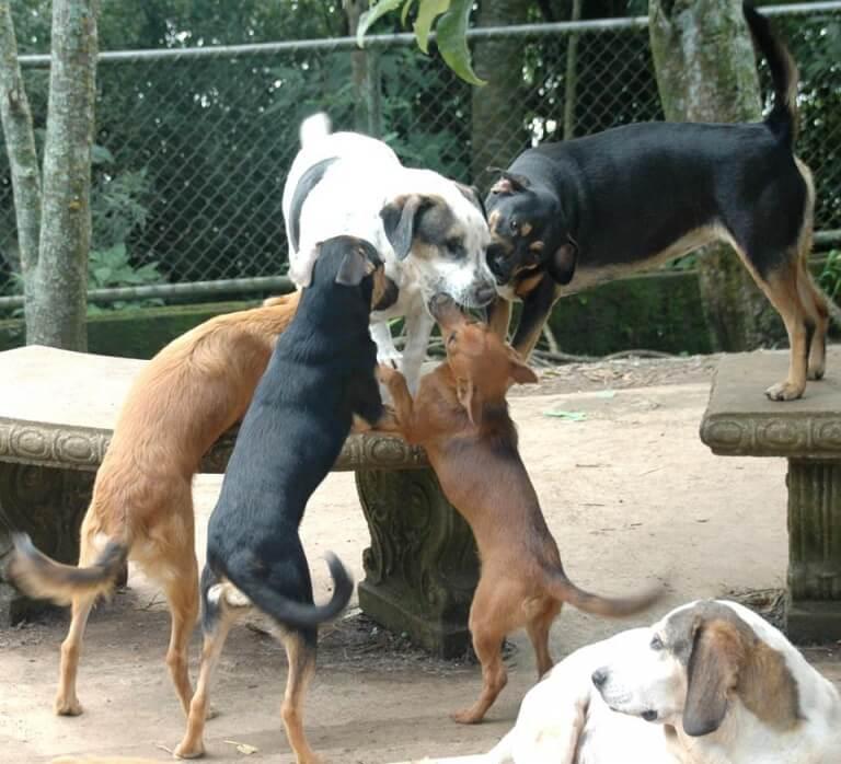 donna-si-prende-cura-di-200-cani-abbandonati