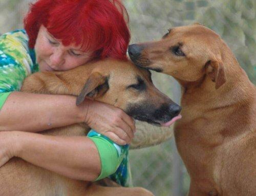 ragazza abbraccia cani abbandonati