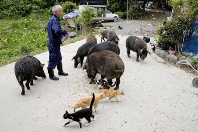 guardiano degli animali di Fukushima