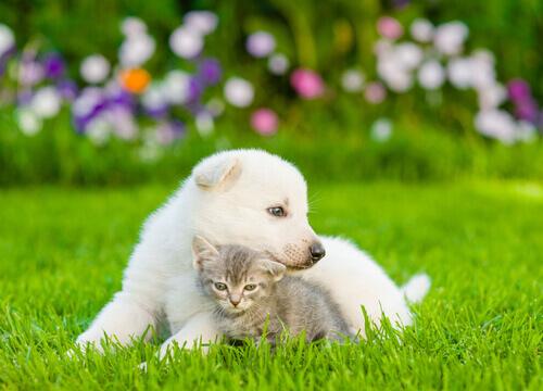i-cani-provano-più-amore-dei-gatti