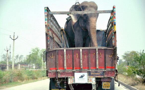 liberazione-di-due-elefantesse