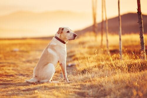 Spagna: multa fino a 30.000 euro per chi abbandona un cane