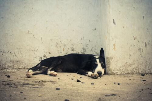 multa-per-chi-abbandona-i-cani