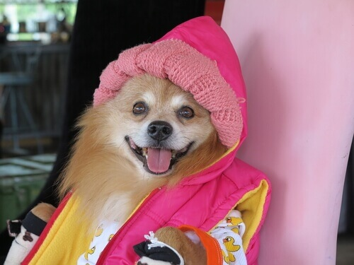 umanizzare-un-cane-vestendolo