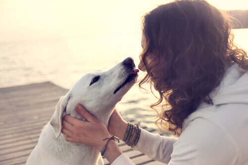 Baciare cani può provocare infezioni