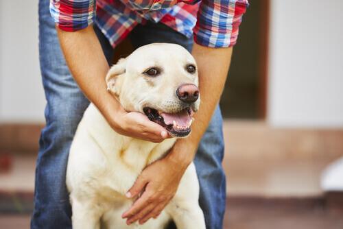 Epilessia nei cani