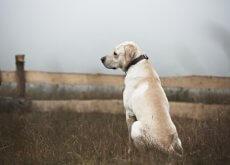 I cani abbandonati