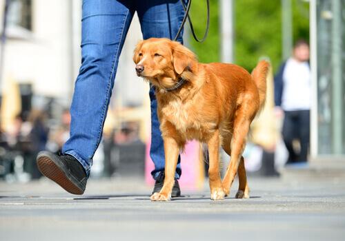 Scottature alle zampe del cane in estate: come evitarle?