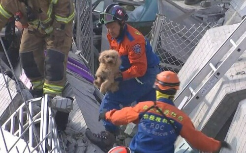 terremoto-taiwan-cane-salvato-dalle-macerie