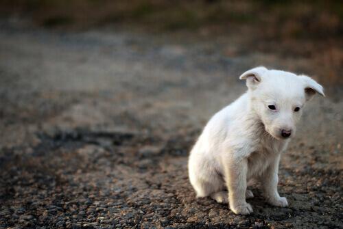 Un cane lasciato in strada