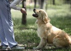 addestrare-il-vostro-animale