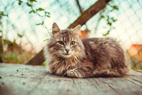 adottare-un-gatto