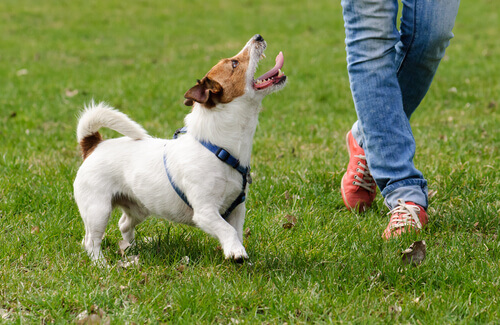 5 trucchi per far sì che il cane risponda al vostro richiamo