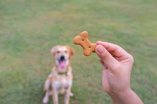 biscotto-cane
