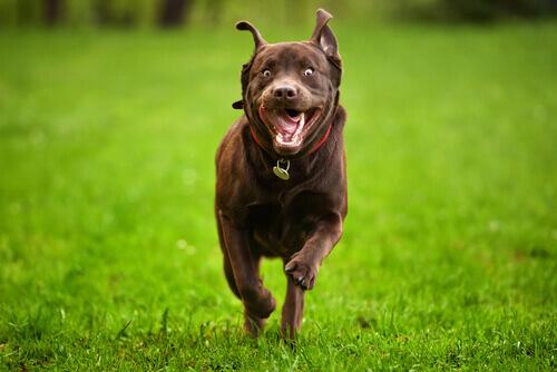 5 consigli per controllare un cane iperattivo