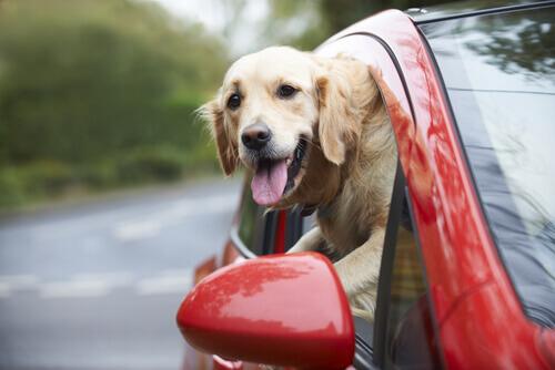 cane-che-mette-fuori-la-testa-dal-finestrino-della-macchina
